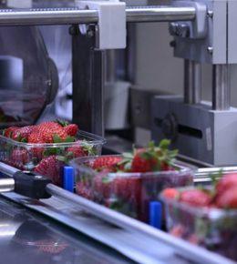 lubricantes para maquinaria de alimentos